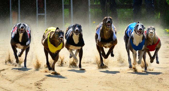 Empresas de apostas contribuem com o British Greyhound Racing Fund