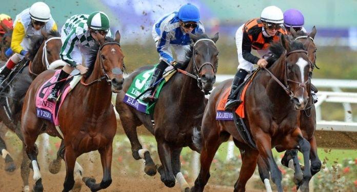 SIS fecha acordo com Codere para transmissão de corridas de cavalos